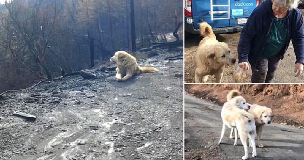 Πυρόπληκτη γύρισε μετά από ένα μήνα στο σπίτι της που κάηκε και βρήκε τον σκύλο της να την περιμένει