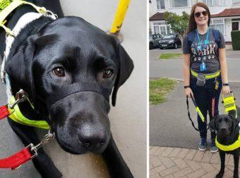 Άνθρωποι ζήτησαν από τυφλή γυναίκα να κατέβει από λεωφορείο επειδή δεν πίστευαν ότι ο σκύλος της ήταν οδηγός της