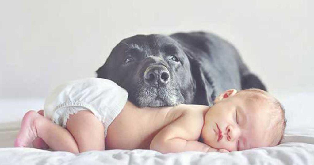 Μοναδικές φωτογραφίες με μεγάλα σκυλιά να φροντίζουν μωράκια!
