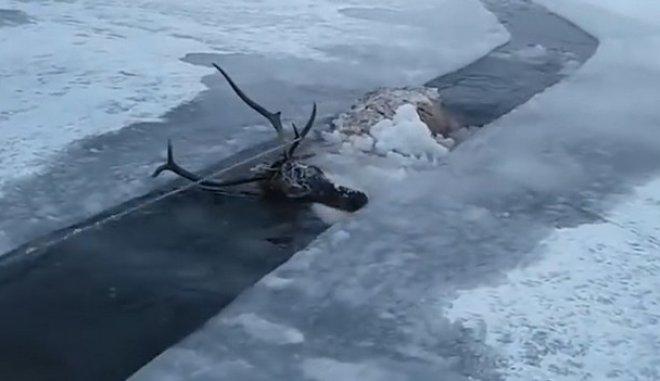Εκπληκτικό: Κυνηγοί σώζουν ελάφι από παγωμένη λίμνη, το ζεσταίνουν και το ταΐζουν