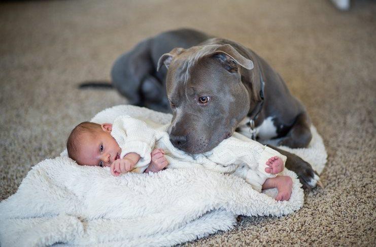 Ήθελε να διώξει το σκύλο γιατί πίστευε ότι θα κάνει κακό στη κόρη του. Μέχρι που ανακάλυψε κάτι