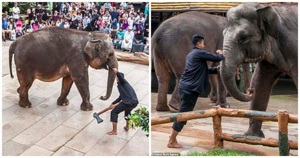 Υπάλληλοι ζωολογικού κήπου μαχαιρώνουν ελέφαντες για να ηρεμήσουν και να τους βγάλουν φωτογραφίες οι τουρίστες