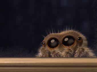 Η αράχνη που θεράπευσε την αραχνοφοβία όλων τώρα θέλει να έρθει μέσα