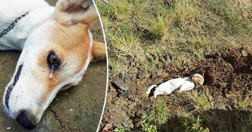 Σκύλος δακρύζει λίγο πριν πεθάνει όταν δηλητηριάστηκε από κλέφτες στην προσπάθεια του να σώσει τους ιδιοκτήτες του