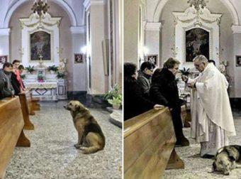 Σκύλος πηγαίνει κάθε μέρα στην εκκλησία και περιμένει τον νεκρό ιδιοκτήτη του να επιστρέψει