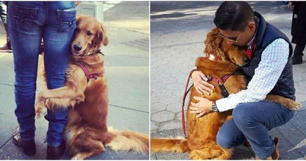 Ο σκύλος «αγκαλίτσας» που δίνει αγάπη στους περαστικούς και τρελαίνει το Ιντερνετ