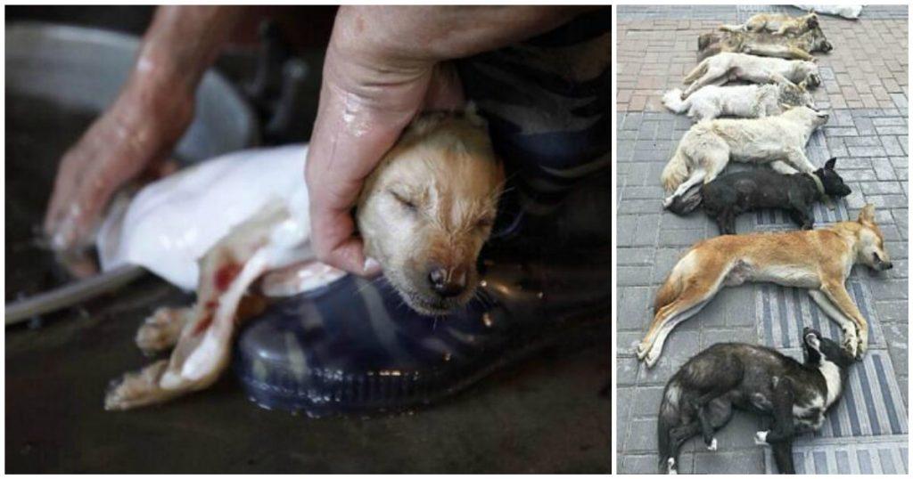 Ιδιοκτήτης εστιατορίου στην Κίνα έκλεψε και σκότωσε οκτώ κατοικίδια σκυλιά με τόξο για να φτιάξει σούπα σκύλου για το εστιατόριο του