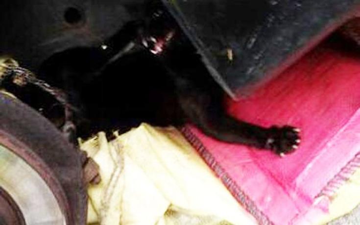 Έδεσαν γάτα κάτω από αυτοκίνητο για να πεθάνει βασανιστικά