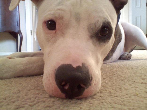 Θα λιώσετε! Όταν τα σκυλάκια κάνουν puppy eyes. Ποιoς μπορεί να τους αντισταθεί;