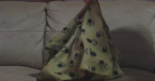 Καλύπτει το σκύλο του με μια κουβέρτα. Όταν την τραβάει; Μας έπεσε το σαγόνι!