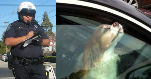 Tιμωρία ΣΟΚ επέβαλε αστυvομικός σε γυvαίκα, που άφησε το σκύλο της κλειδωμένο στο αυτοκίνητο!
