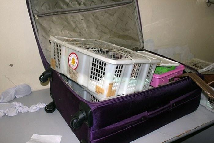 Ένας ζωολογικός κήπος κρυμμένος σε βαλίτσες