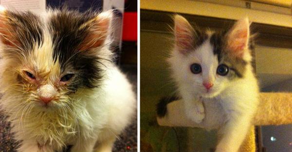 15 τυχερά γατάκια πριν και μετά τη διάσωσή τους!