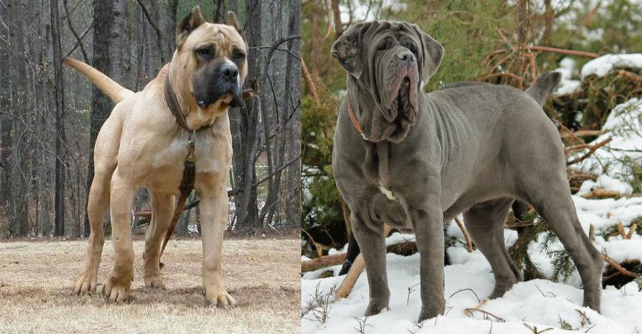 Αυτές είναι οι 10+1 πιο επικίνδυνες ράτσες σκύλων
