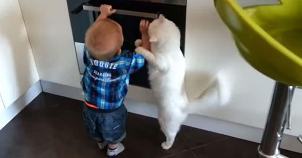 Γάτα προστατεύει και πάει να σώσει ένα αγοράκι που θέλει να ανοίξει αναμμένο φούρνο!