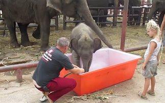 Παιχνίδια με το νερό για το μικρό ελεφαντάκι