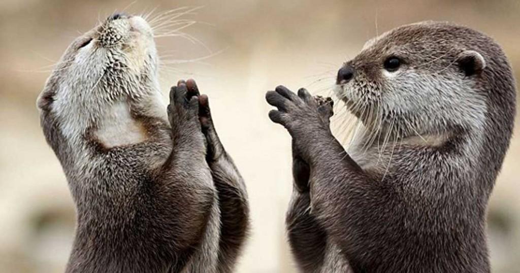 Απίθανες φωτογραφίες από βίδρες που προσεύχονται και μια… χαμογελαστή κουκουβάγια!