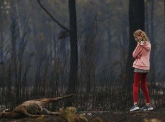 Φωτιές στην Αυστραλία: Ο μεγάλος αφανισμός των ζώων