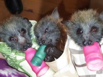 Εθελοντές από όλο τον κόσμο πλέκουν μάρσιπους για τα ορφανά ζώα της Αυστραλίας