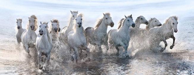 Λευκά άλογα φωτογραφίζονται να τρέχουν στη θάλασσα. Η αίσθηση της ελευθερίας στο αποκορύφωμά της