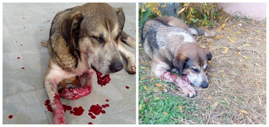 Γίνεται έκκληση να βρεθεί αυτός που χτύπησε αδέσποτη σκυλίτσα στα Καμένα Βούρλα- Το ζώο δεν τα κατάφερε