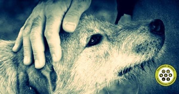 Ψήφισμα: ΟΧΙ στην ευθανασία αδέσποτων ζώων