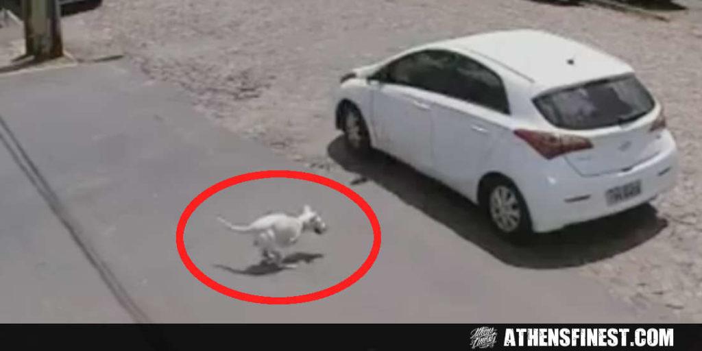 Βραζιλία: Σκύλος με αναπηρία εγκαταλείπεται δύο φορές την ίδια μέρα!! (Σκληρό vid)