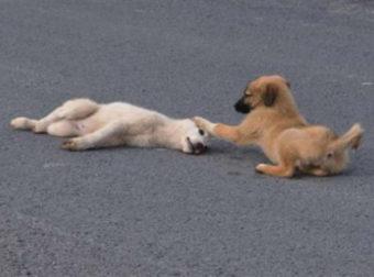 Σκύλος έμεινε δίπλα στον τραυματισμένο τετράποδο φίλο του μέχρι να τον πάνε στον κτηνίατρο
