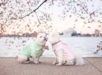 """Αποφάσισαν να Γιορτάσουν τον """"Αρραβώνα"""" των Σκυλιών τους με μια Αναμνηστική Φωτογράφιση. Το Αποτέλεσμα; Παραμυθένιο!"""