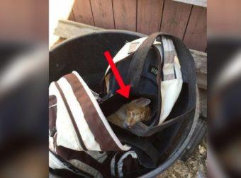 Είδε μια Τσάντα στα Σκουπίδια, όταν Παρατήρησε ΚΑΤΙ να Κουνιέται.. Μόλις, την Άνοιξε, Πάγωσε!