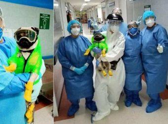 Κoρoνoϊoς: Ο σκύλος θεραπευτής που ανακουφίζει τους γιατρούς από το στρες
