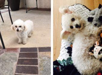 Αυτή η Σκυλίτσα δεν άντεξε τον Χαμό των Κουταβιών της, λίγο μετά τη Γέννα και τώρα Προσπαθεί να θηλάσει τα Κουκλάκια της