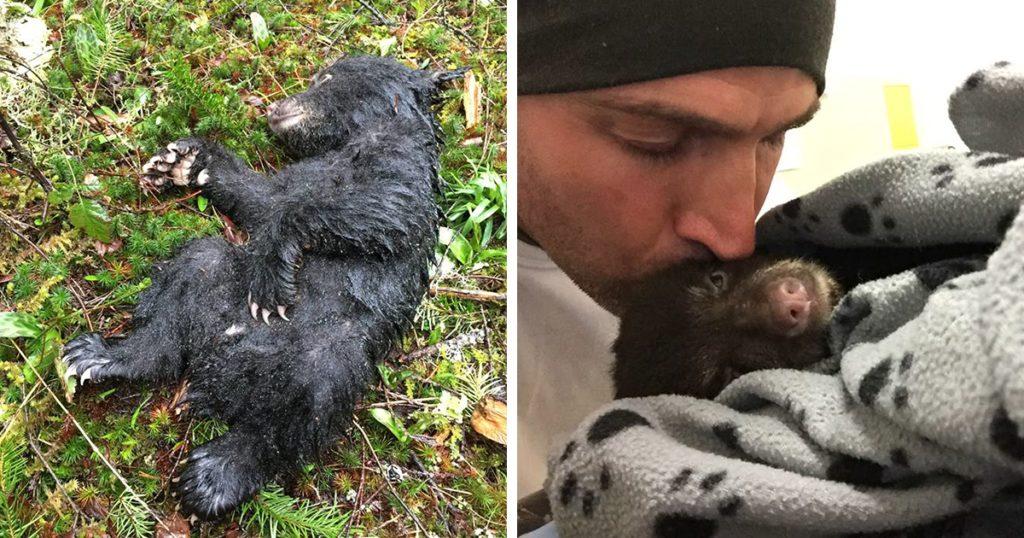 Βρήκε ένα Αρκουδάκι να Αργοπεθαίνει στο Δάσος και το Πήρε μαζί του για το Σώσει. Για Κακή του Τύχη όμως…