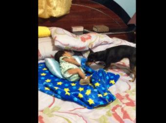Το Μωρό άρχισε να Κλαίει. Δείτε τώρα τι κάνει ο Σκύλος… Απίστευτο!