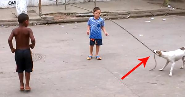 Είναι πραγματικά απίστευτο αυτό που έκανε αδέσποτος σκύλος όταν είδε αυτά τα παιδιά να παίζουν