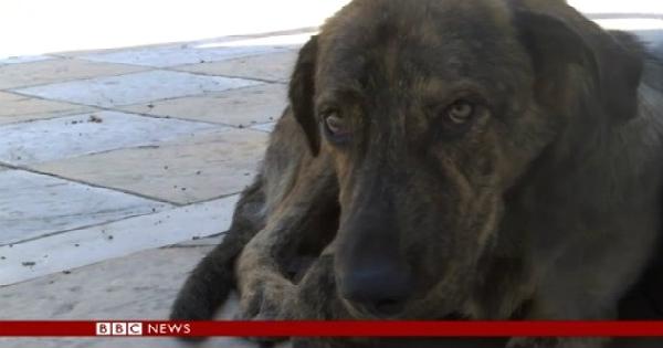 Περισσότερα από 1 εκατ. αδέσποτα σκυλιά θύματα της ελληνικής κρίσης – Συγκλονιστικό ρεπορτάζ του BBC