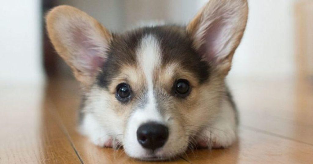 Τα σκυλιά μπορούν να καταλάβουν αν κάποιος είναι κακός άνθρωπος