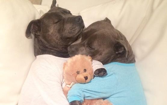 """Θα """"πέσει"""" το ίντερνετ μόλις δείτε αυτά τα αξιολάτρευτα σκυλάκια με τις πιτζάμες τους!"""