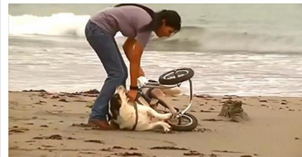 Αυτή η κοπέλα βρίσκει ένα χτυπημένο σκυλί στην παραλία… Δείτε τι έχει στα πόδια του