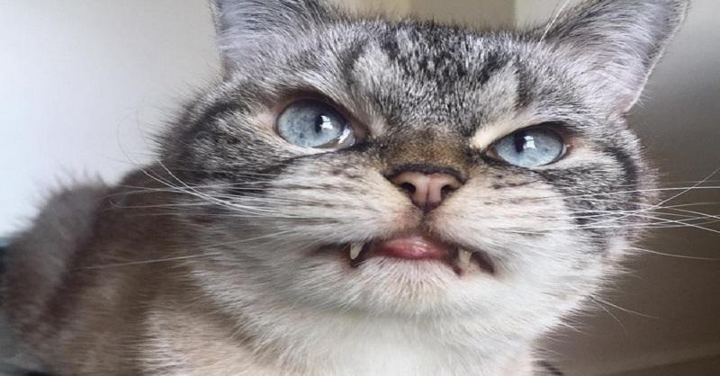 Μια αξιολάτρευτη γάτα-βρυκόλακας κατακτά το διαδίκτυο