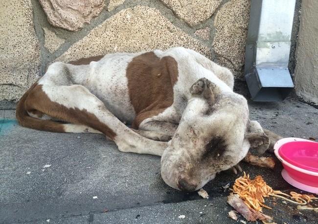 Η φροντίδα σώζει σκύλο που αφέθηκε να πεθάνει στο δρόμο – Δείτε τις φωτογραφίες