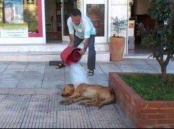 Αθώος ο φαρμακοποιός που είχε αδειάσει κουβά με βρωμόνερα και χλωρίνη σε αδέσποτο στη Θεσσαλονίκη!