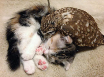 Μια γάτα και μια κουκουβάγια είναι οι πιο απίθανοι κολλητοί που έχουμε δει ποτέ!