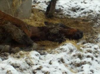 Η Συγκινητική Ιστορία και Μεταμόρφωση του Κακόμοιρου άλογου που Αργοπέθαινε μέσα στο κρύο και Σώθηκε