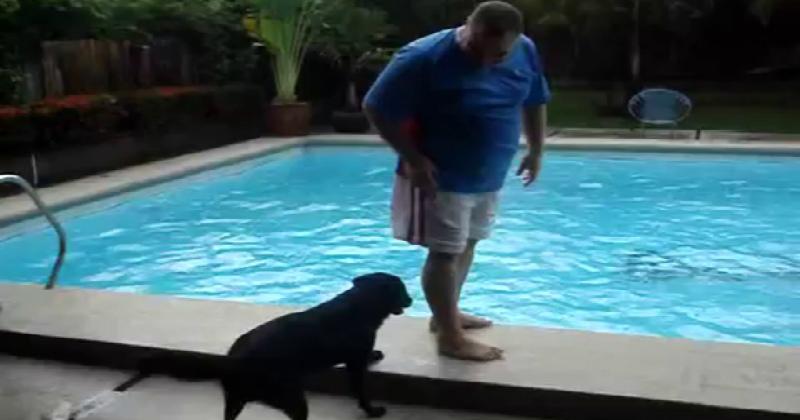 Ένας άντρας στέκεται όρθιος δίπλα από μια πισίνα… Τώρα δείτε τι θα κάνει ο σκύλος από πίσω του!