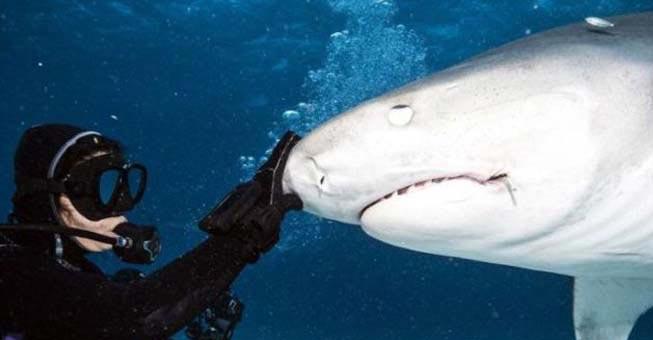 Πως είναι στο εσωτερικό του στόματος ενός καρχαρία;