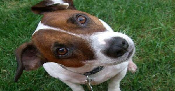 Το ήξερες; Δες γιατί οι σκύλοι γέρνουν το κεφάλι όταν τους μιλάμε…
