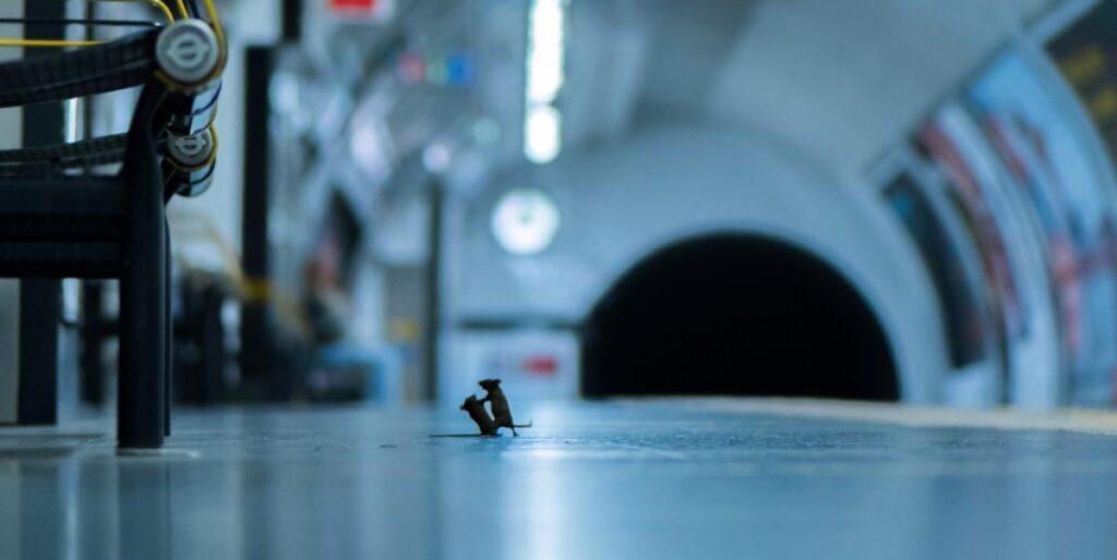 Η καλύτερη φωτογραφία της χρονιάς: Δύο ποντίκια «μαλώνουν» στο μετρό Λονδίνου