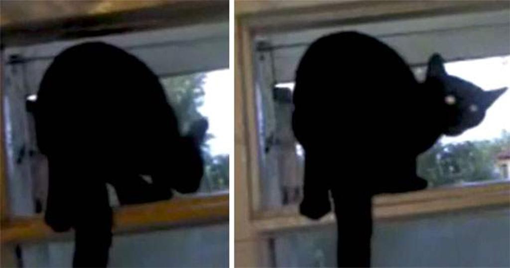 Γάτα πιάστηκε να γαβγίζει στο παράθυρο και το γύρισε αμέσως σε νιαούρισμα