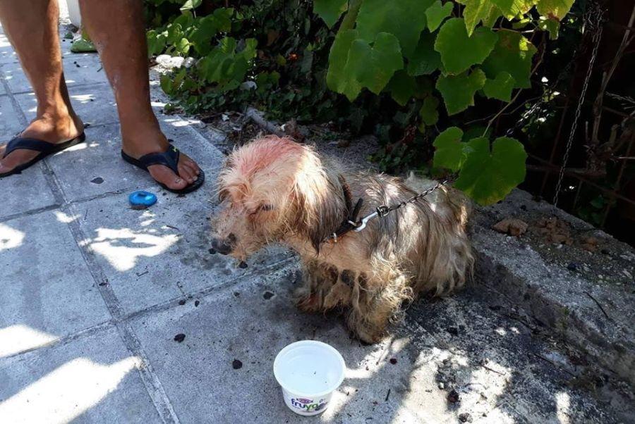 Φρίκη στην Κέρκυρα: 62χρονος έλουσε με πετρέλαιο σκύλο και του επιβλήθηκε πρόστιμο 30.000 ευρώ
